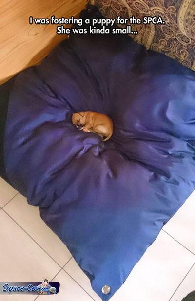 funny cute small puppy