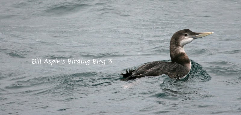 Bill Aspin's Birding Blog 3