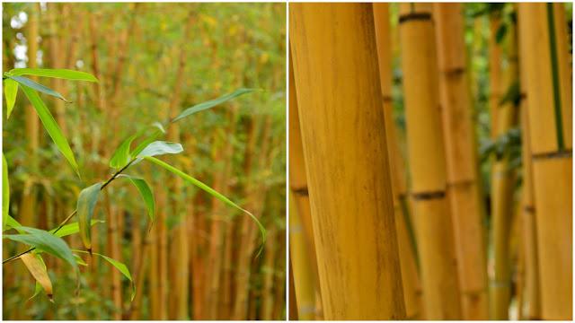 Menton  - jardin du Val Rameh - bambous