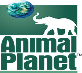 Animal Planet Google TV Channel