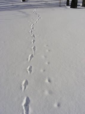 Animal's tracking