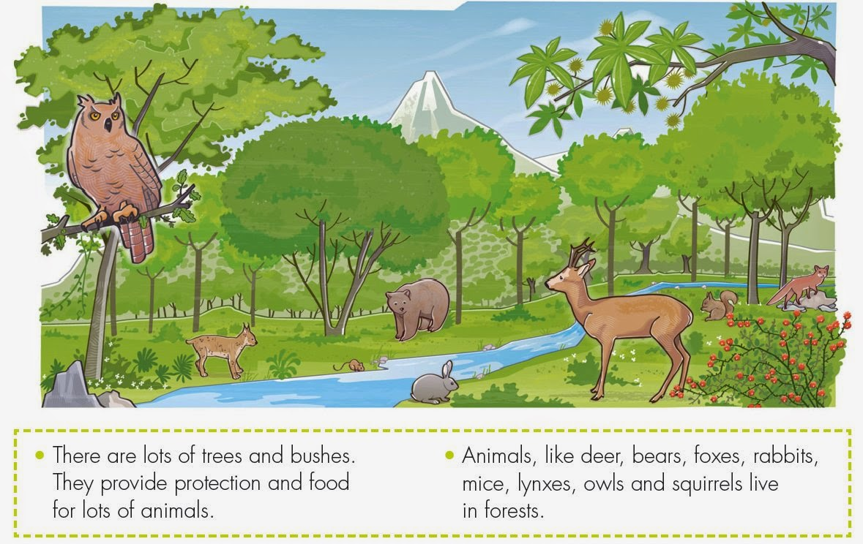 Gummy bears' blog: Animal habitats