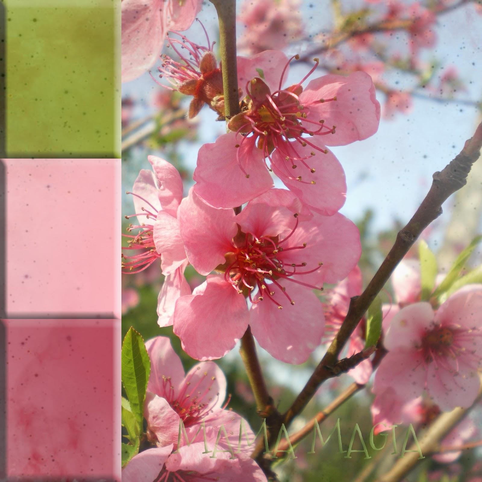 Mama magia fiori di primavera for Fiori di primavera