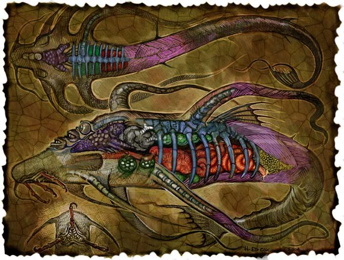 {$tags} Anatomia di un aboleth - by E. Cox Signori della Follia: Il Libro delle Aberrazioni (2005) © Wizards of the Coast & Hasbro