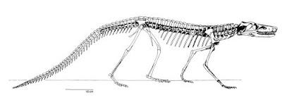 Dibothrosuchus squeleton