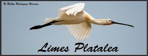 Proyecto Limes Platalea