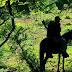 La República Marihuanera, viaje a Michoacán Tierra de Narcos PAGINA 3