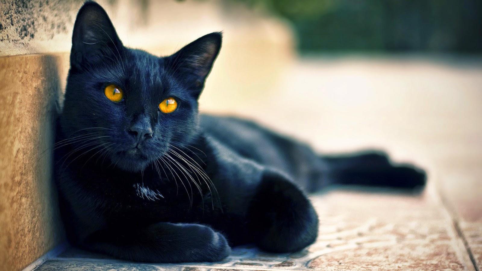 loterias gato negro: