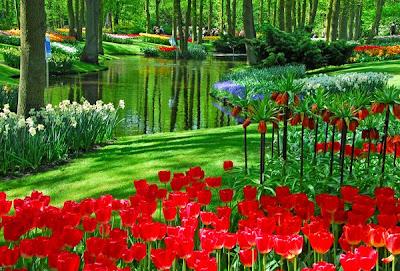 حديقة كيوكينهوف Keukenhof أكبر و أجمل حديقة أزهار في العالم. 1