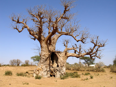 Foto Paisaje de Senegal