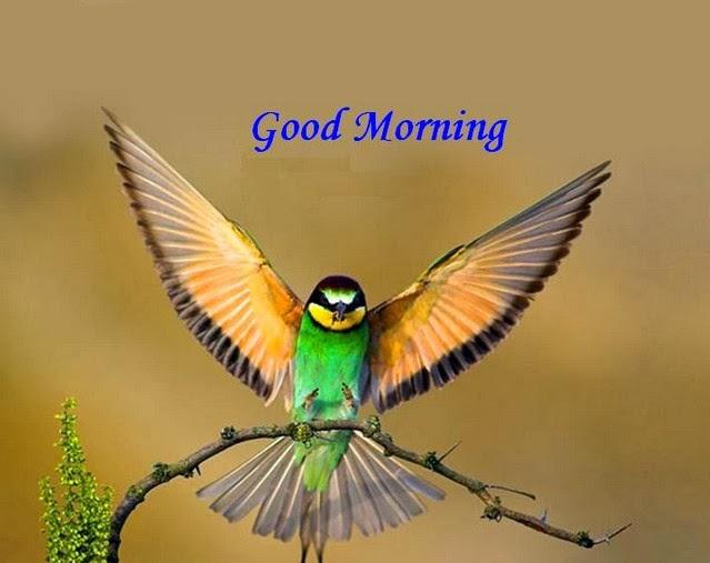 Good Morning Beautiful Birds Images : Good morning wallpapers find quotes beautiful photos