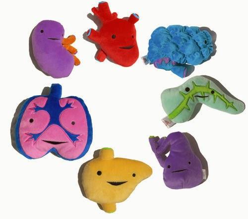Los juguetes mas extraños: organos humanos internos