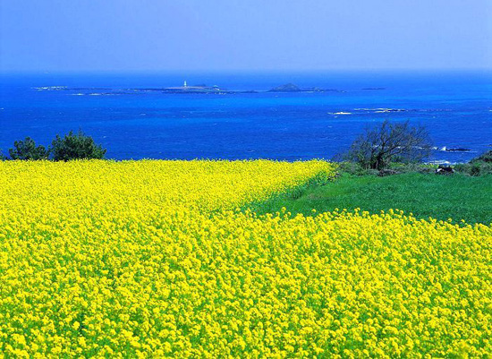 Jeju Island-South Korea