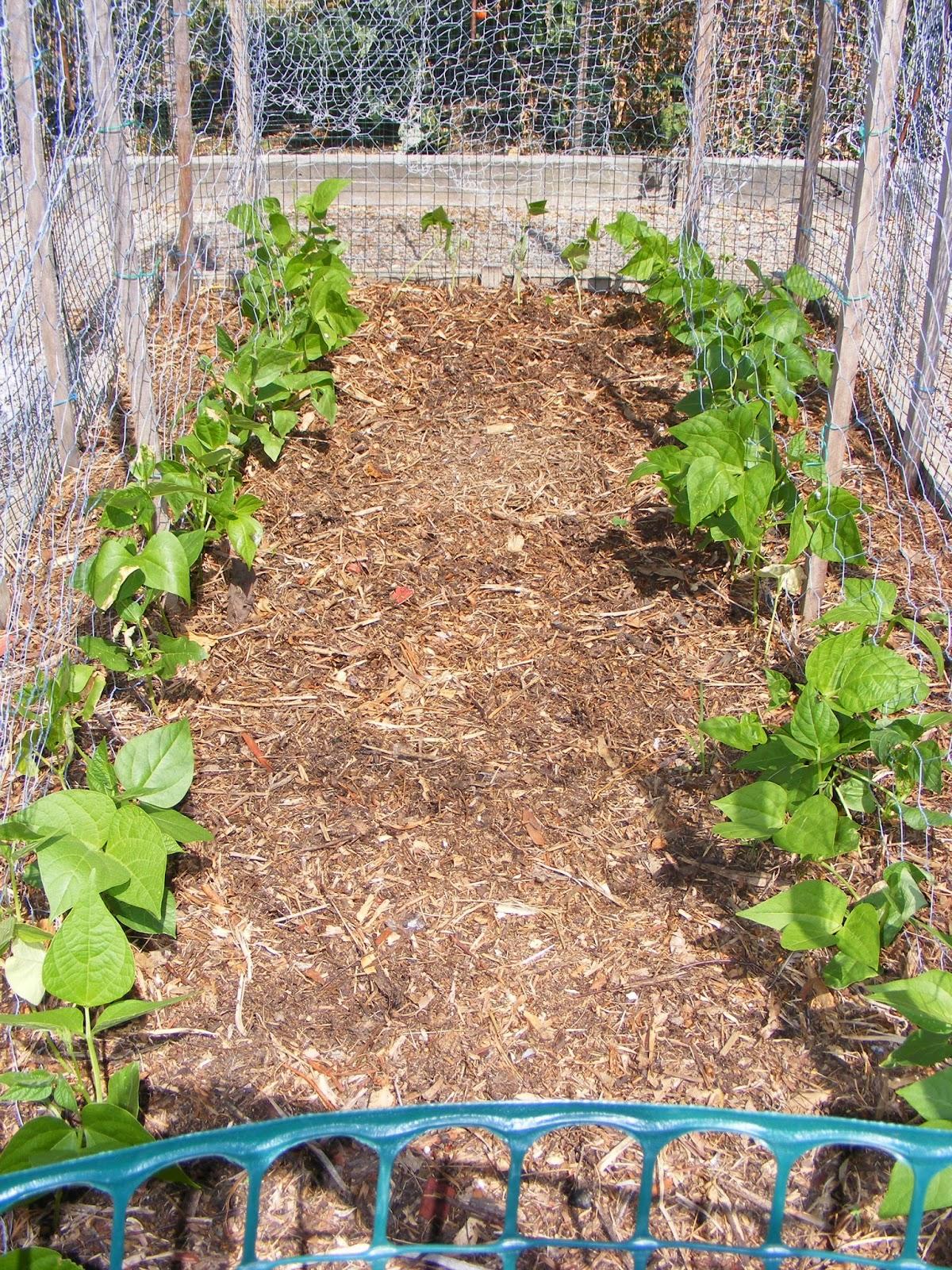 backyard self sufficiency 12 what u0027s happening in the backyard