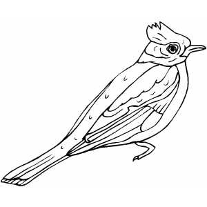 bird coloring pages, animal coloring pages