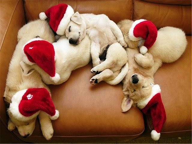 Beautiful Christmas with dogs