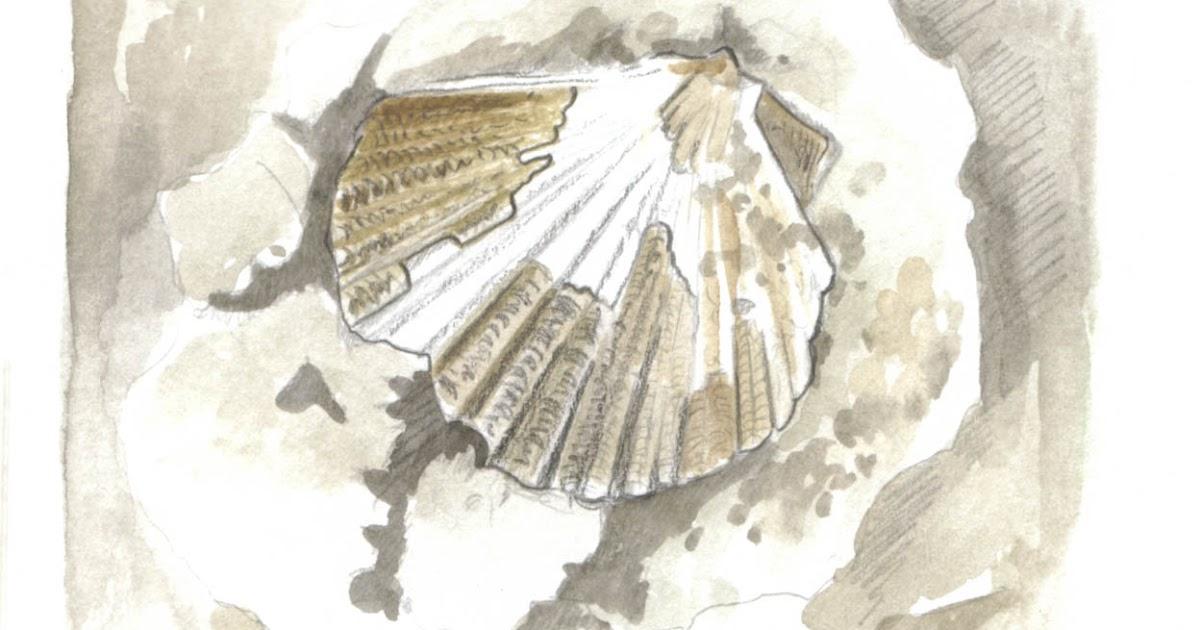 Il taccuino di mari pecten fossile il sogno si avvera - Sogno casa fabriano ...