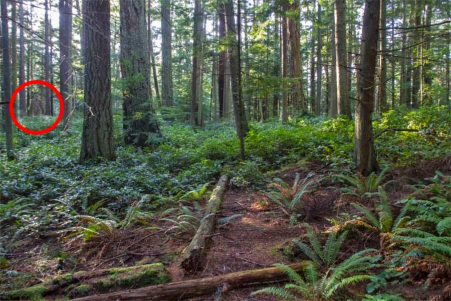 pacific northwest forest - photo #39