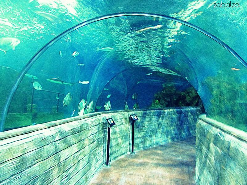Malta National Aquarium Agnieszka H Zabalza