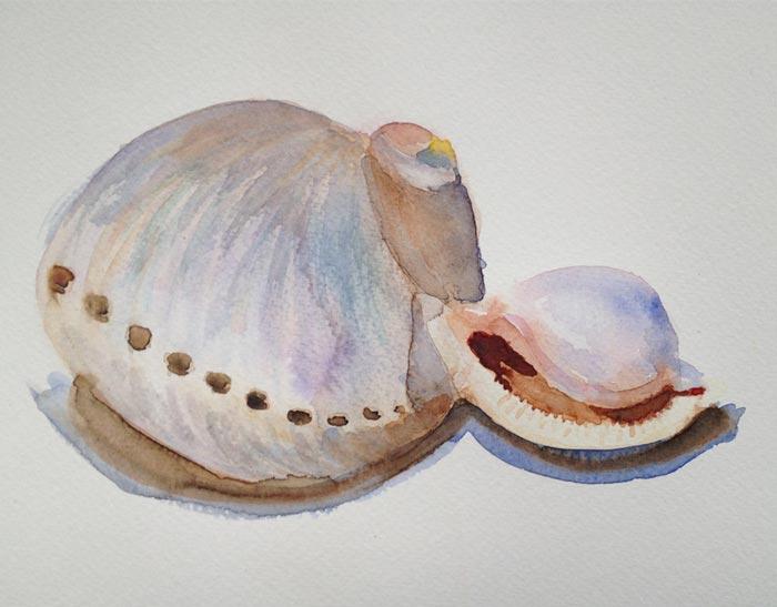 acuarela de dos conchas del natural