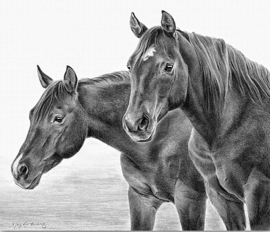 imagenes-de-dibujos-a-lapiz-de-caballos