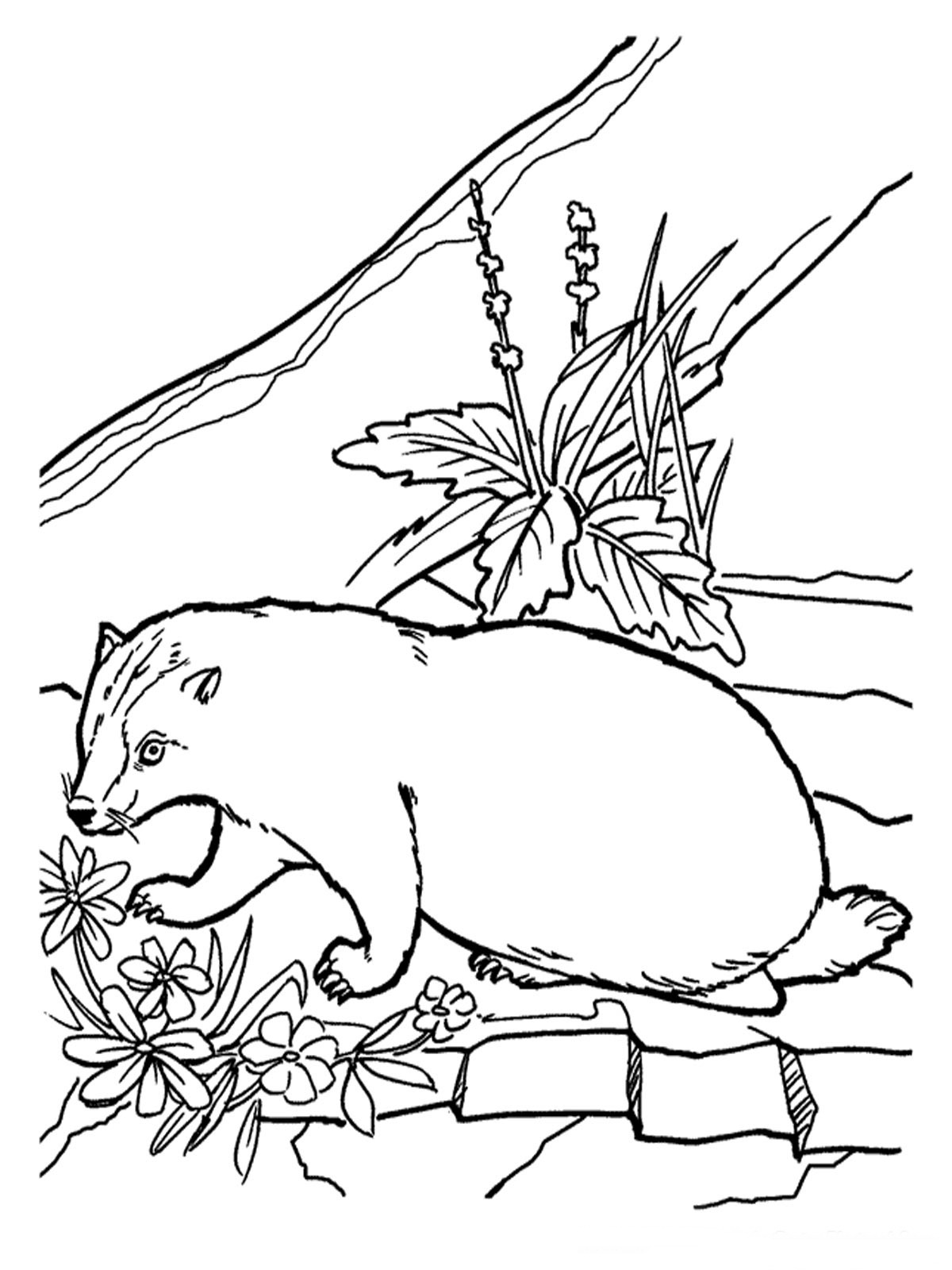 free realistic animal coloring pages - photo#50