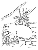 Realistic Badger Coloring Pages