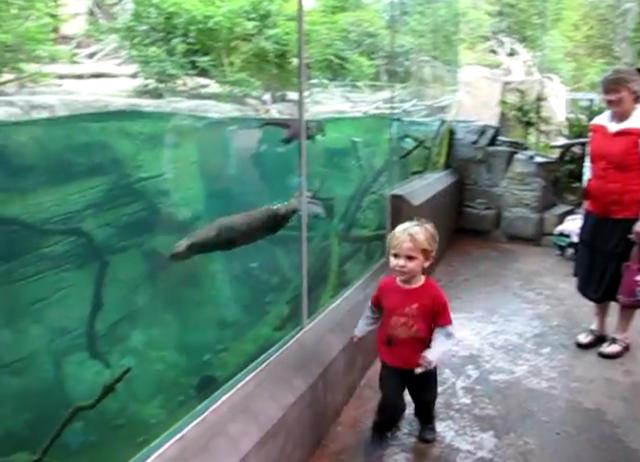 Garotinho brinca com uma lontra no zoológico