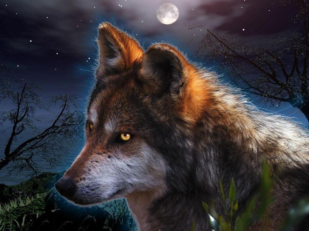 http://1.bp.blogspot.com/-sHQs4Vw9RCY/T5bCr6N6-NI/AAAAAAAAAR8/D644jyYKCkw/s1600/wolf_wallpaper-28845.jpg