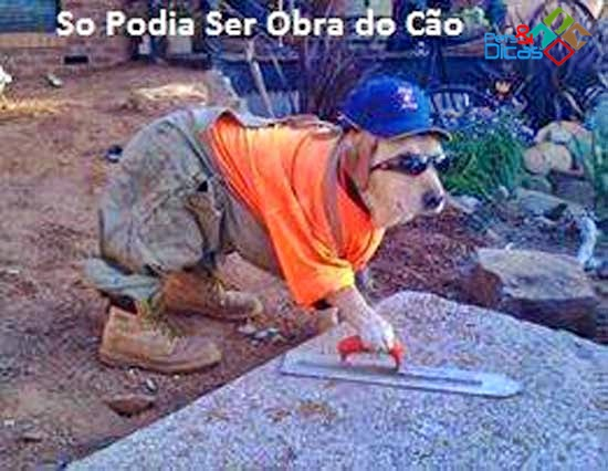 Cão fazendo obra