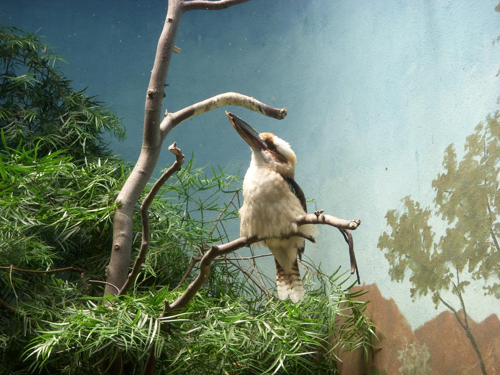 Bronx Zoo- Birds of Prey Sign | ZooChat