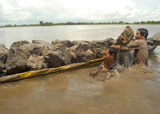 Người dân ở xã Phú Lộc, huyện Tân Châu, An Giang, đặt dớn cá linh mỗi ngày mang lại thu nhập hơn 500.000 đồng đến cả triệu bạc.