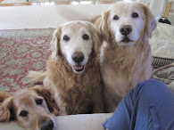RIP Sweet Golden Shirley ~ March 16,2013