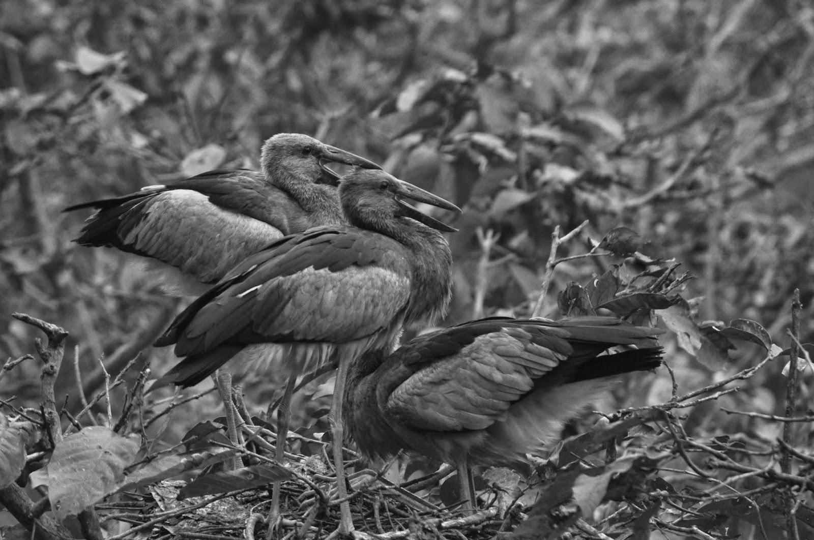Diary 4: Kulik wildlife sanctuary