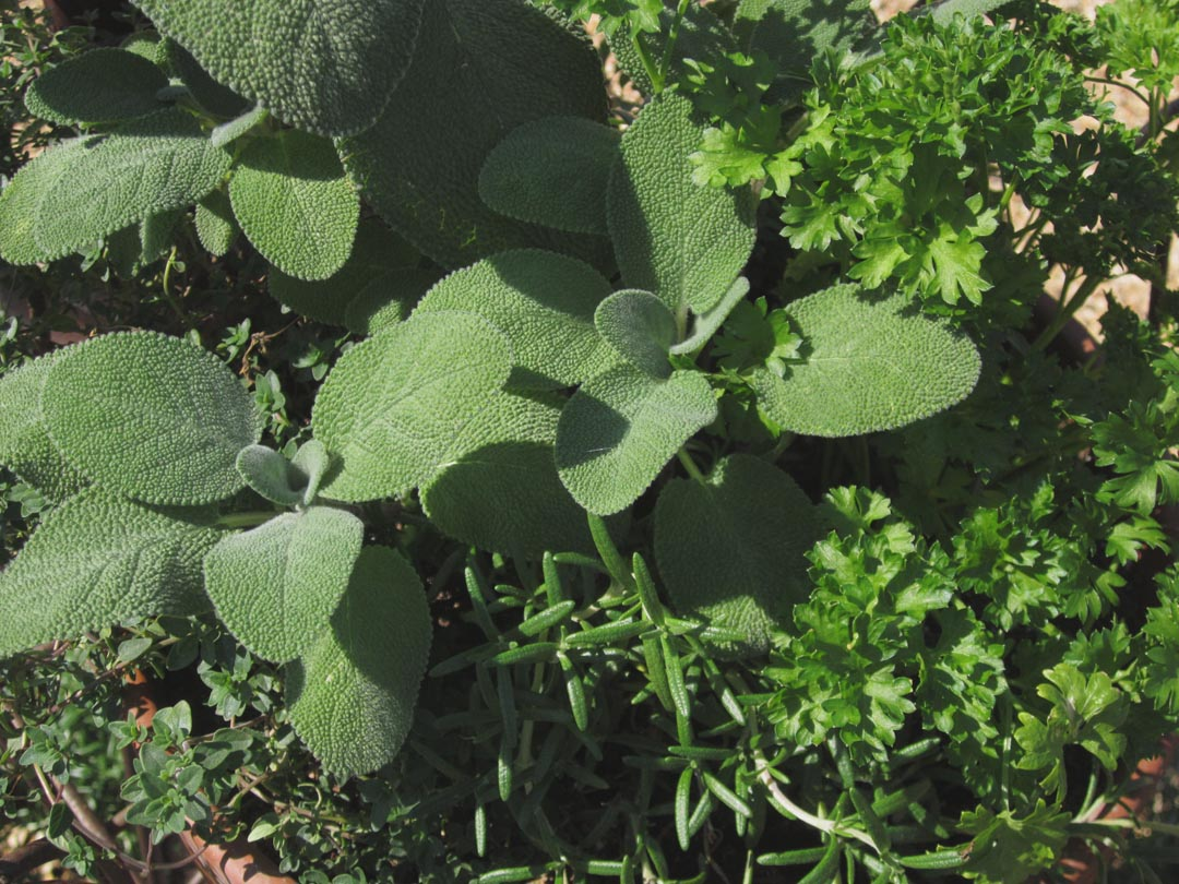garden thymes november 2012