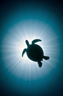 Wandering Turtle