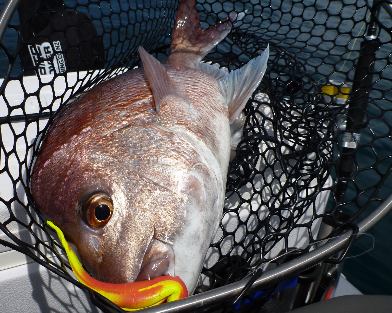 Jet ski fishing blog report 091 soft bait fishing is for Snappers fish chicken