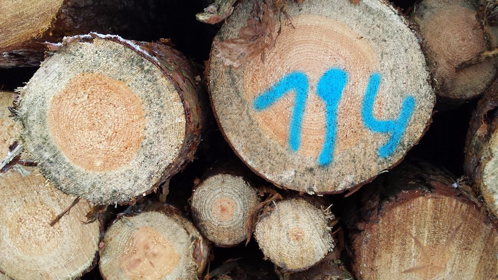 Zawiadomienie o wadzie drewna.