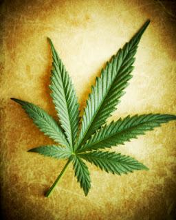 coltivare semi di marijuana