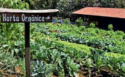 Aprenda como montar uma horta orgânica na sua escola em cinco passos