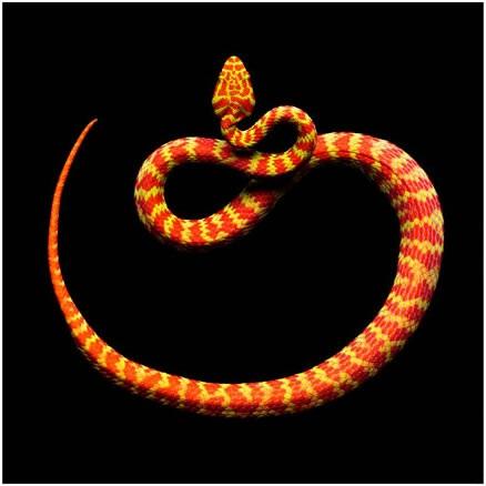 Fotografías de serpientes hermosas, pero letales!