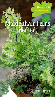 Maiderhair Ferns