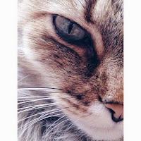 Kitty // Fear in Wonderland