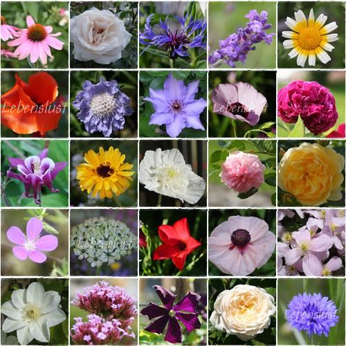 Lebenslust Wo Blumen Bluhen