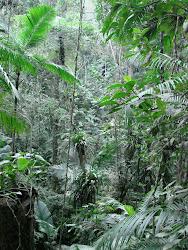 Pagar para Conservar Floresta!