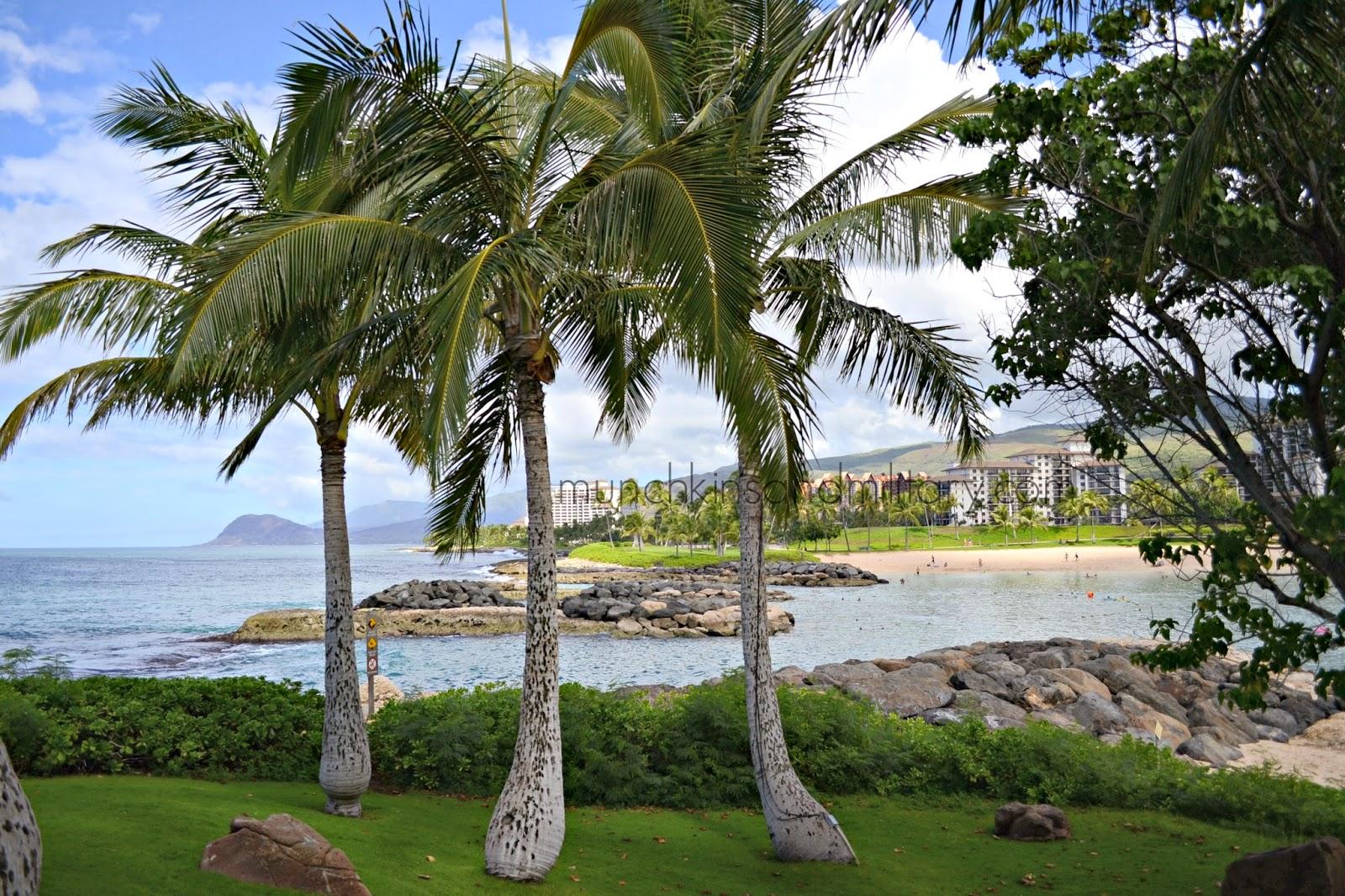 Palm trees at the Koolina Lagoons, Oahu, Hawaii
