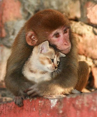cat-monkey-odd-couple