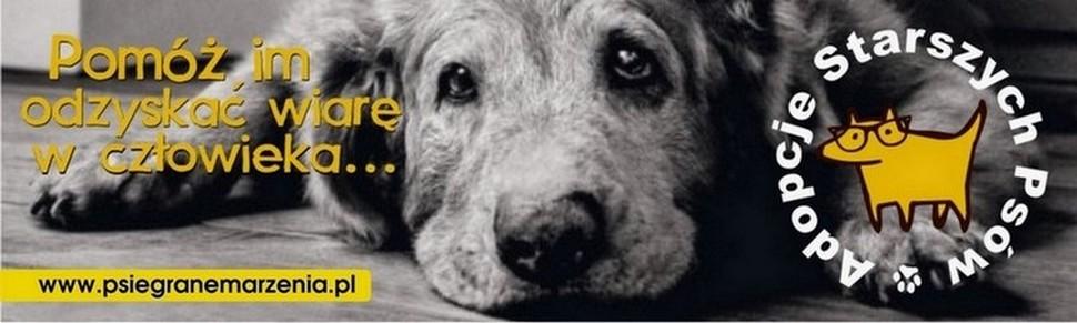 """Fundacja """"Psiegrane Marzenia"""" - adopcje starszych psów"""