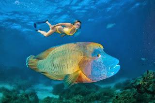 napoleon fish 3