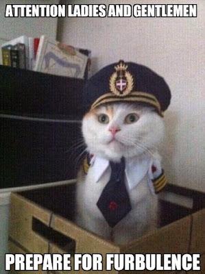 kucing lucu pakai seragam